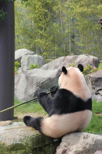 まだ見たことないパンダに会いにいこ~!!お初、和歌山の旅 Vol.3 アドベンチャーワールド・パンダ編  2015.5.16-17