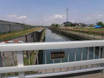 久喜市鷲宮のコスモスふれあいロードをポピーを見ながらコース上の橋が何本架かっているか確認しながら歩く