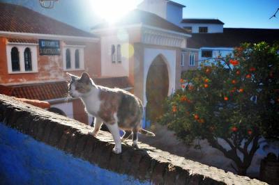 シャウエン - 猫、時々青。