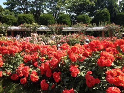 京の週末 ~お寺でヨーガ&植物園でお散歩~