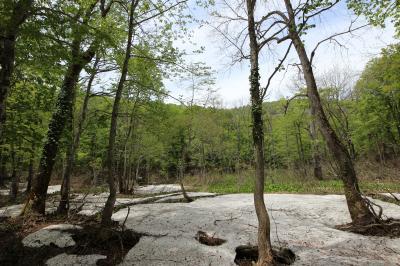 2015年5月白馬連峰眺望の旅 ①奥裾花自然園みずばしょう