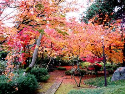 2014 NOV 晩秋の川越にて紅葉を見て回る