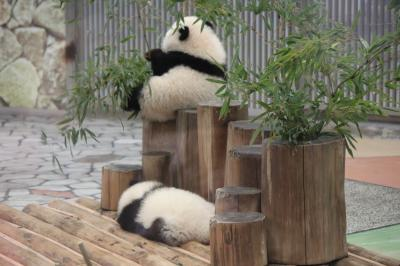 白浜アドベンチャーワールド♪双子のパンダ、桜浜&桃浜(おうひん&とうひん)