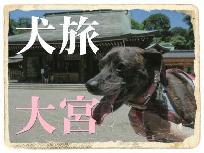 犬旅 ~大宮~