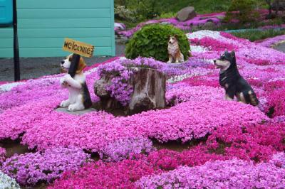 倶知安で芝桜を見て公園めぐり~後志管内ショートトリップ