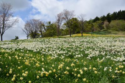 北海道花巡りドライブの旅・その3(玉川公園=せたな町)