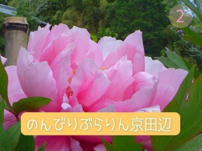 のんびりぶらりん京田辺 vol.2