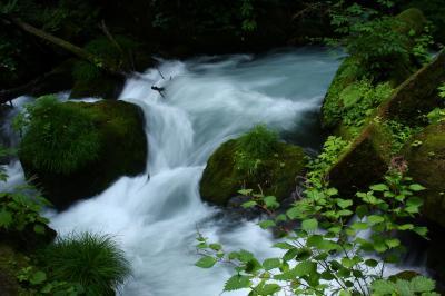 奥入瀬渓流散策