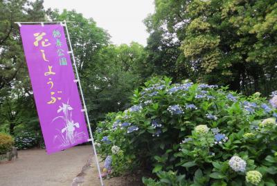 2015梅雨、尾張・三河の紫陽花巡り:鶴舞公園(1/6):鶴舞公園給水塔、あじさいの散歩道、アジサイ