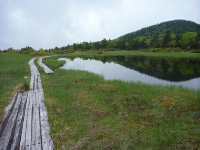 山上に突然開ける雲上の湿原へ 雨天あきらめだったがまさかの天気!