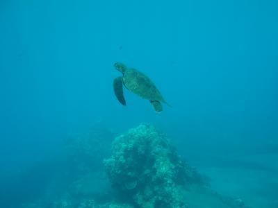 マウイ島ダイビング&グルメ 2日目