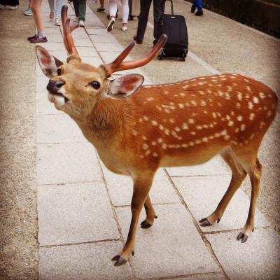 2015☆6月 今、ふたたびの奈良へ