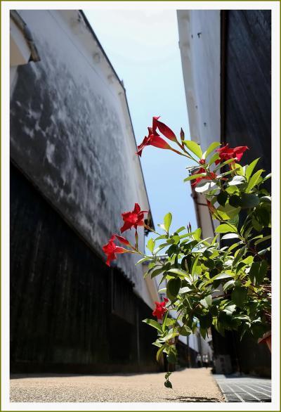Solitary Journey [1610] 中世の町割がそのまま残る白壁土蔵造りの町筋は金魚ちょうちんがいっぱい!<やない白壁通り>山口県柳井市