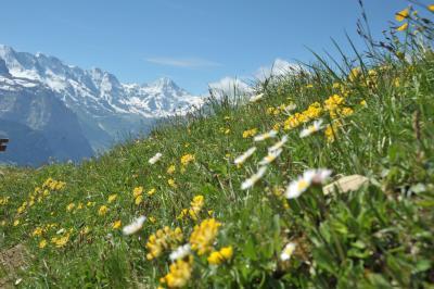 スイス花とハイキングの旅シーニゲブラッテ3