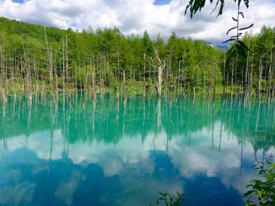 初夏の北海道・美瑛  パッチワークの丘、青の池 他