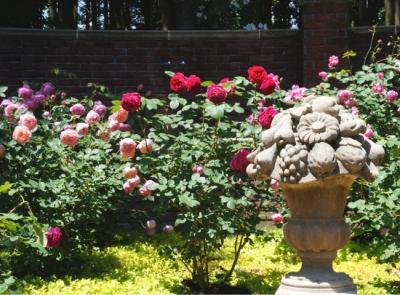 不思議スポット七ッ洞公園 バラシーズンの秘密の花苑