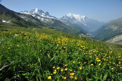 スイス花とハイキングの旅シャモニーバルム