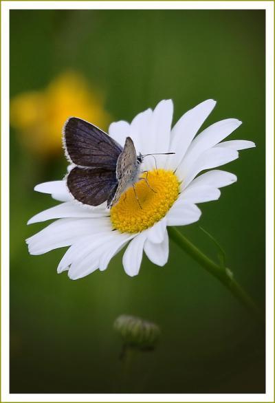 Solitary Journey [1613] 初夏、自然をいっぱい感じながら標高800mの高原を楽しむ♪<霧ヶ谷湿原に咲く花や蝶々>広島県北広島町