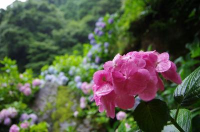 糸島・唐津の滝と紫陽花 ~ 白糸の滝 & 見帰りの滝 ~