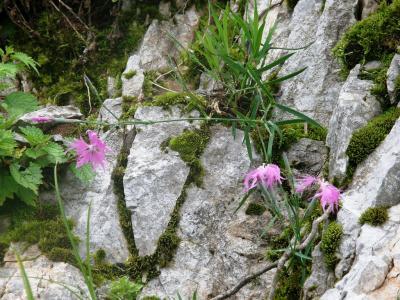 花の伊吹山登山と琵琶湖周辺の旅・・・②二日目・二合目から山頂まで