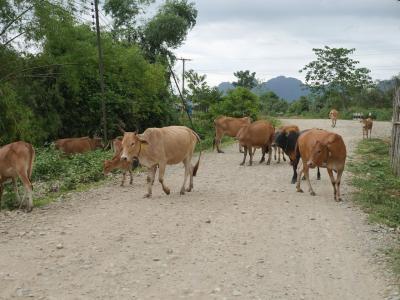 ラオス、バンビエンあるいはルアンプラバンで出会った動物、昆虫たち。