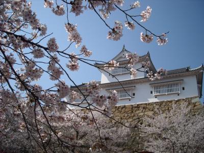 お花見するなら津山城鶴山公園