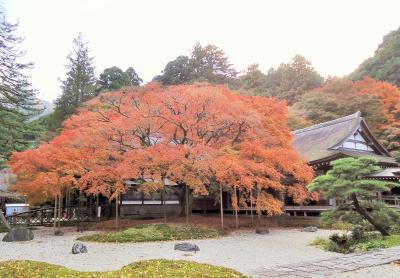 千如寺:大楓の紅葉
