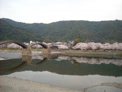 桜と錦帯橋と岩国城など