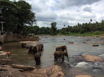 2015夏 スリランカ直行便3泊5日 ピンナワラ象の孤児院→コロンボ編