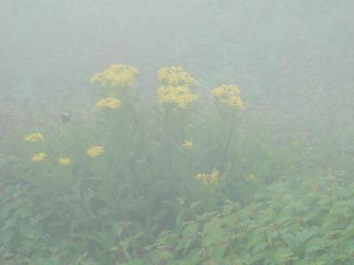 琵琶湖バレーと伊吹山 涼しくて別天地