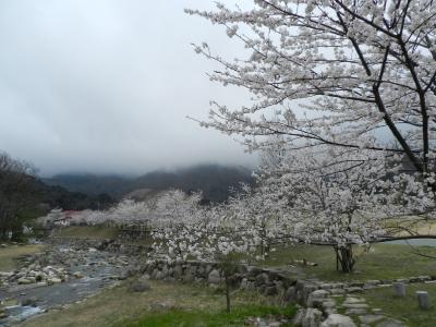 『マキノ高原』と『調子ヶ滝』◆遅めの桜を求めて滋賀県北部へ≪その2≫