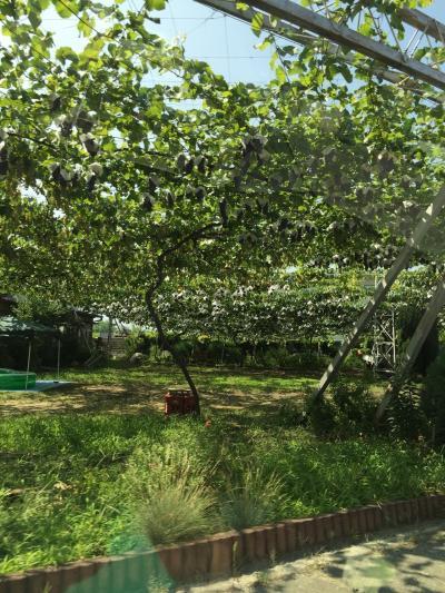山梨桃食い倒れツアープラス嵐の湯でデトックス(笑)