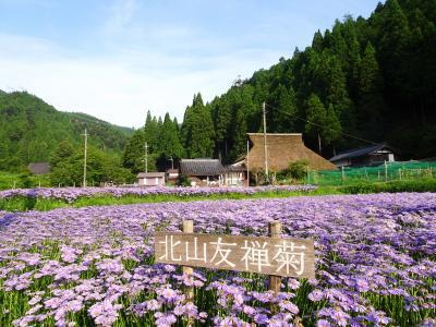 海外から京都へ <久多の古民家(農家)民宿「おくで」に宿泊して友禅菊を愛でる旅>