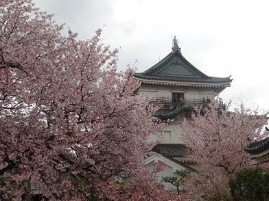 和歌山 桜&温泉 旅行 1  ~和歌山城の桜&根来寺の桜、忘帰洞温泉~