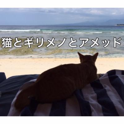 猫とギリメノとアメッド