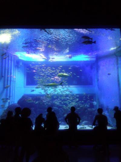 新潟百川海水浴場から妙高高原・上越市立水族博物館