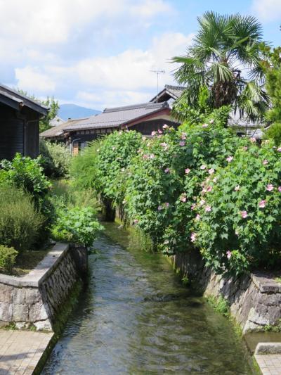 子どもと一緒に楽しむ、水と生きる川端のある町・針江~近江のむかし町をあるく~