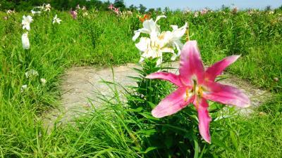 2015年8月♪小樽の春香山ゆり園