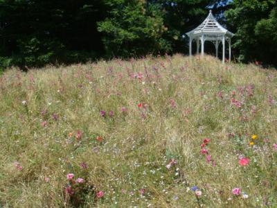 英国風庭園ブルーボネット
