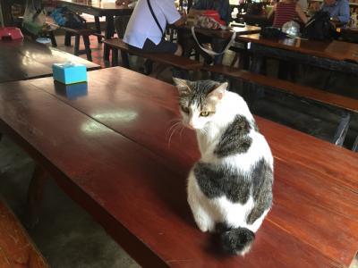 猫探し【タイ(ニャンチャナブリ鉄道・Nyanchanaburi)編】