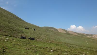ソリちゃん、青海省の高原地帯に出かける 前半