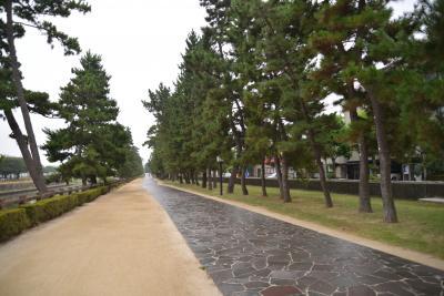 おくのほそ道 第1回 ③  草加 「秋風や綾瀬川畔の松並木」