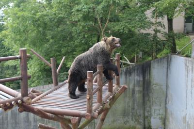 登別温泉で泊まりクマ牧場で遊ぶ