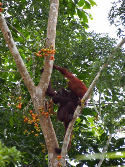 ボルネオのジャングルで動物三昧②
