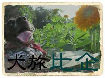 犬旅 ~比企~