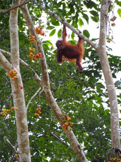 ボルネオのジャングルで動物三昧③