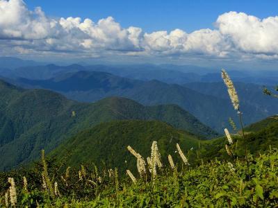 伊吹山・竹生島クルーズと琵琶湖ぐる~り10景めぐり:伊吹山ハイキング