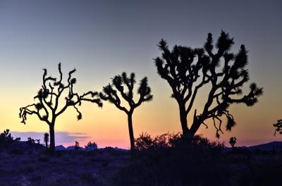 2015 Memorial Day Weekend Trip to Joshua Tree etc 5月21日 旅行1日目