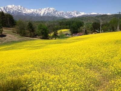GW北信濃の旅(前編)中山高原菜の花の黄色い絨毯