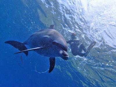 御蔵島 Dolphin swimming イルカと泳ぐ週末